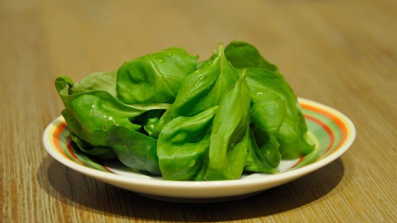 what is a substitute for basil