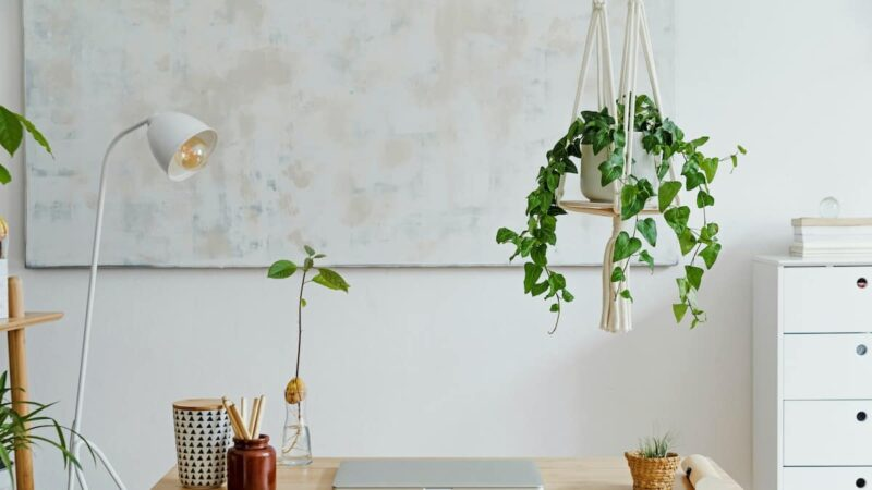 How to hang plants from the ceiling without drilling securely? – 5 awesome tricks!